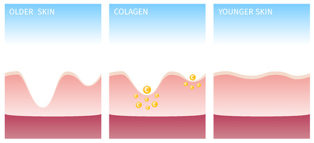 collagen: collagen and skin Illustration