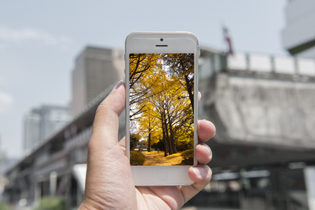 nature picture: mobile , smart phone with nature picture and city at the background , nature mobile set 1
