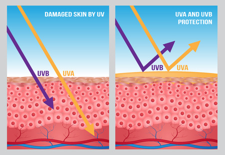 suntan lotion: UV , uv a and uv b protection Illustration