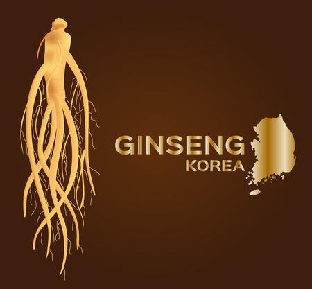 traditional medicine: ginseng vector , ginseng of Korea , ancient traditional medicine