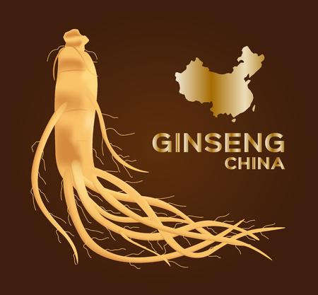 ginseng vector , ginseng of China , ancient traditional medicine Illustration