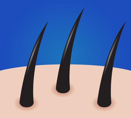 sensory: hair vector graphic , hair   icon