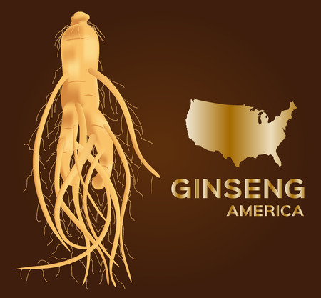oriental medicine: ginseng vector , ginseng of America , ancient traditional medicine Illustration