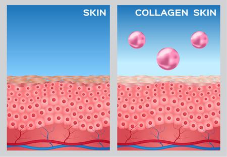 collagen: collagen turn a skin to white , white collagen Illustration