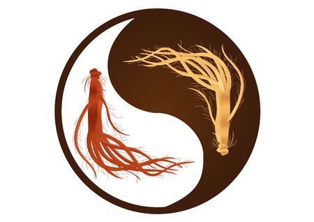 음과 양 인삼 벡터, 한국 인삼, 고대의 전통 의학, 빨간색과 흰색 인삼