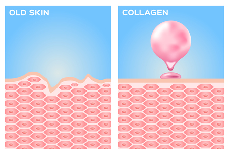 collagen and skin vector . pink collagen 일러스트