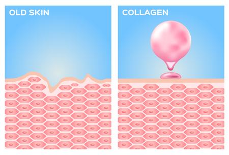 kolagen i wektorowe skóry. różowy kolagen Ilustracje wektorowe