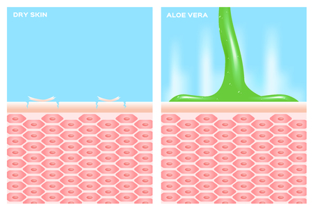 moisturizer: aloe vera cream apply on skin cell . aloe vera bring moisturizer to skin