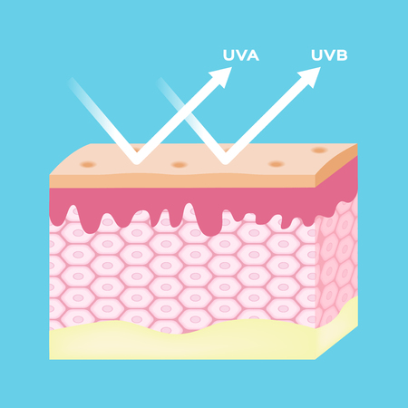 uv protection vector , uv reflect by skin