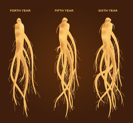 6 years: ginseng vector set , ginseng growth from 1 - 6 years