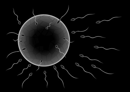 Illustration of sperms going to the ovule. Image concept of fecundation. sperm vector