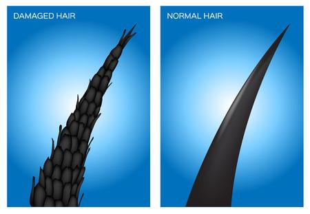 damaged hair and normal hair vector
