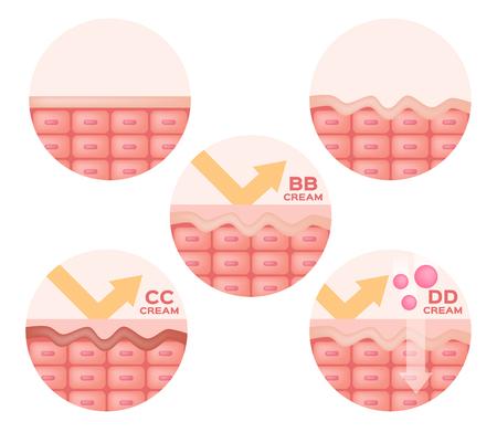bb: cc , bb , dd cream and skin anatomy vector