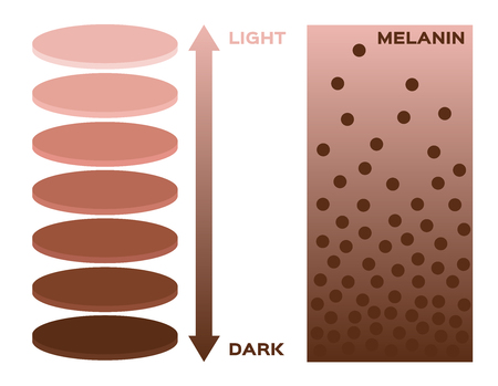 light skin: skin color and melanin index , infographic vector . 3 chart . dark to light skin Illustration