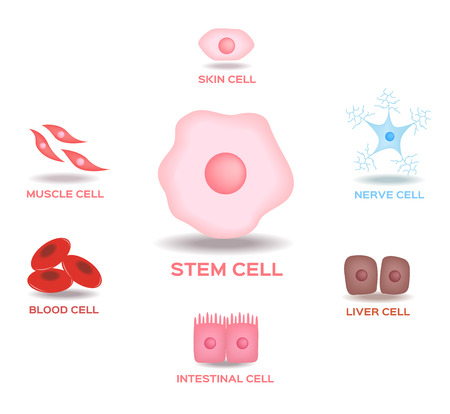 tissues: Illustration of the Human Stem Cell Applications on a white background