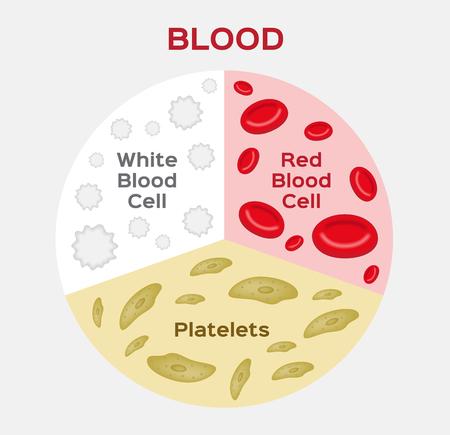 血図の組成物。赤と白の血液細胞。ベクトル。解剖学