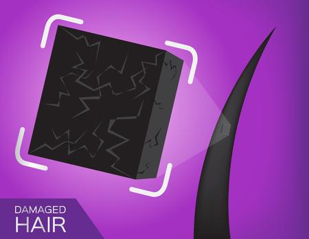 dandruff: dry hair vector . close up on damaged hair Illustration
