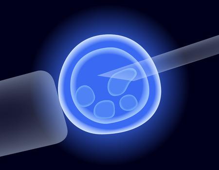 célula madre, vector de inseminación artificial