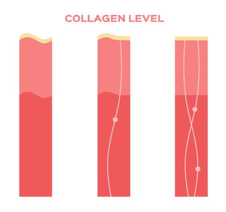 younger: collagen in younger skin and aging vector version Illustration
