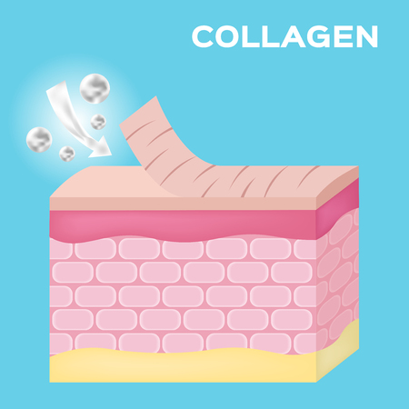 collagen apply on old skin to make it smooth vector , serum