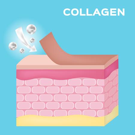 serum: collagen apply on skin to make it white vector , serum Illustration