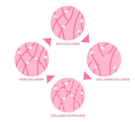 life cycle of the collagen in human skin vector Stock fotó - 71667389