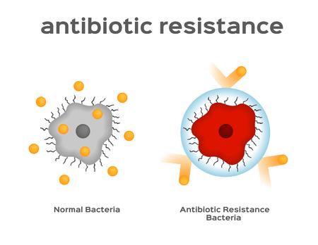 antibioticumresistentie bacteriën en virusvector