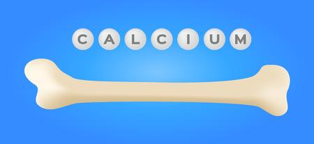 Bone calcium vector Illustration