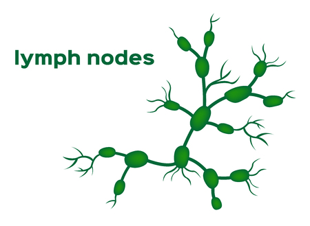 lymph nodes vector
