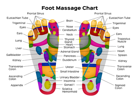 Foot reflexology chart with description of the internal organs and body parts. Vector illustration . anatomy