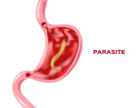 parasite in stomach vector