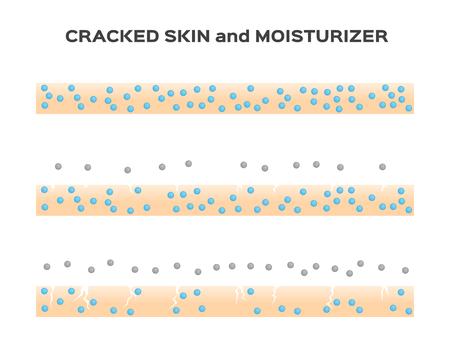 oxidation: moisturizer lose . aging skin vector