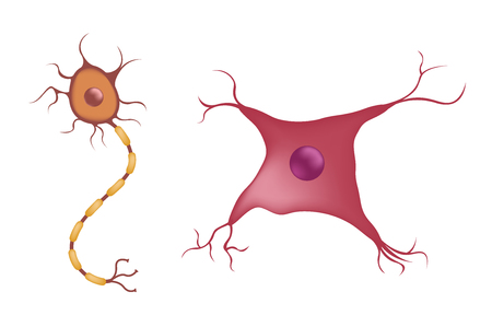 education: Nerve Cell Diagram. Vector illustration
