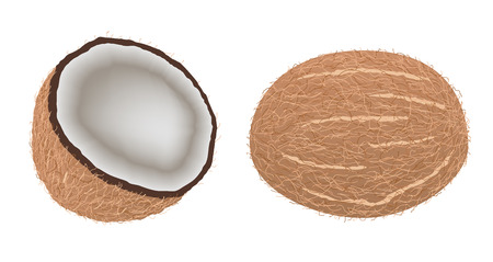 Opened coconut, cut into half Иллюстрация
