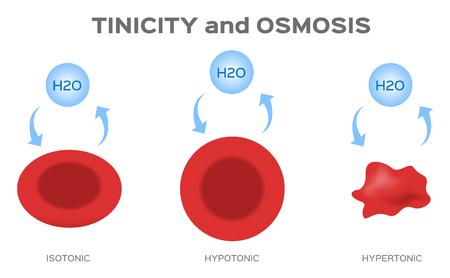 Tonicity and osmosis  イラスト・ベクター素材