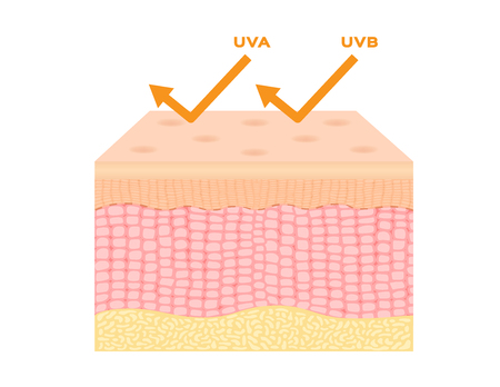 melanin: uv protection vector