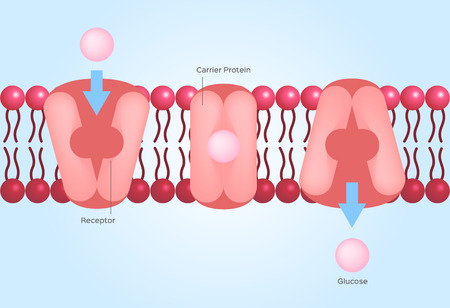 Facilitated diffusion cell anatomy concept illustration. Çizim