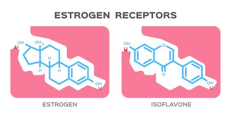 エストロゲンとイソフラボンの受容体イラスト。