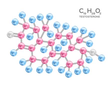 Testosterone structure vector  anatomy.