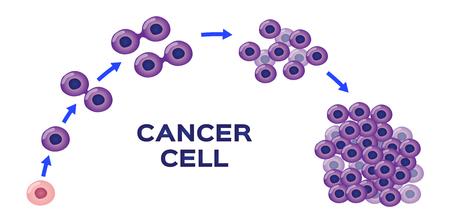stadium i wektor rozwoju komórek rakowych
