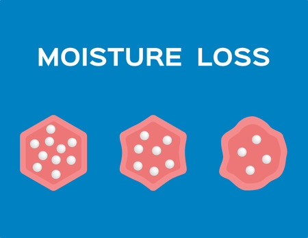 moisture loss in cell vector