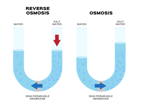 osmosis and reverse osmosis infographic vector Illustration