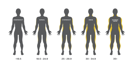 human fat from under weight to obese vector Illustration