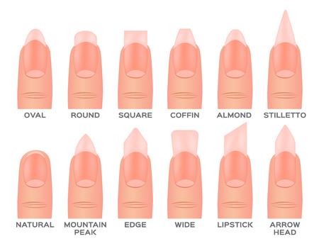 Set kinds of nails. nail shapes and type. Illusztráció