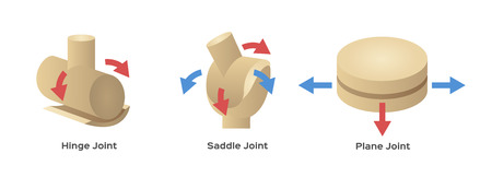 different joint type vector
