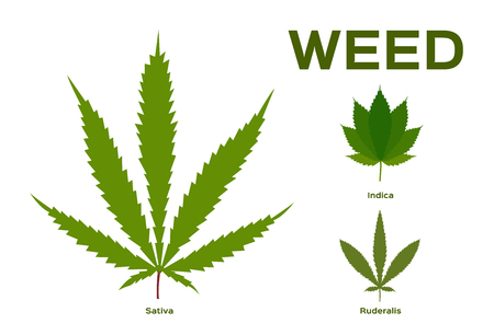 Cannabis (Marijuana) Leaf / weed vector