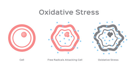 Oxidative Stress cell vector  free radical 일러스트