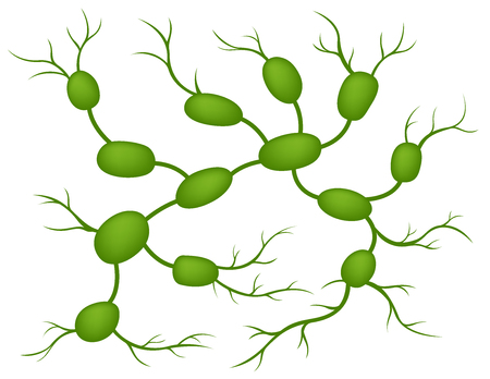 lymph nodes Illustration