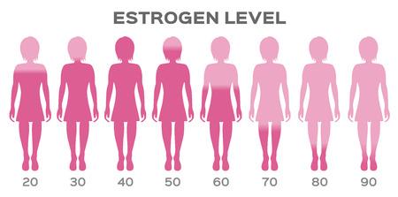 Östrogen Hormonspiegel Vektor / Mann Vektorgrafik