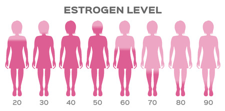estrogen Hormone Level vector / man Ilustrace